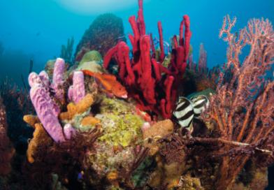Saba_Corals_Fish