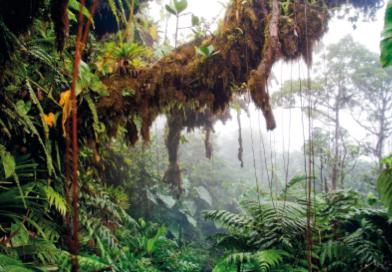 Saba_Trail