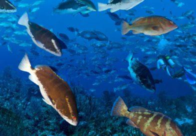 little-cayman-large-fish-school-1200x1200-600x600