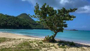 Antigua Hermitage Beach