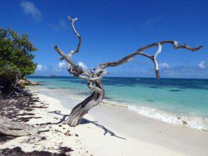 Antigua Jabberwock Beach