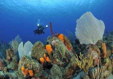 Statia-Diving