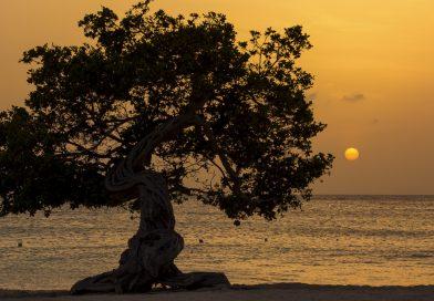 Aruba_Divi_Baum_im_Sonnenuntergang
