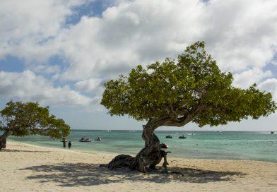 Aruba_Divi_Tree