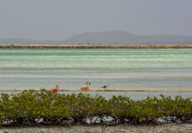 Bonaire_Flamingos_im_Pekelmeer