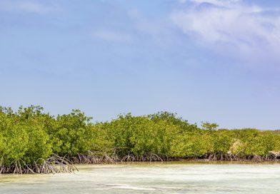 Bonaire_Mangroven_im_Pekelmeer