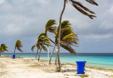 Bonaire_Palmen_am_Pink_Beach