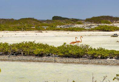 Bonaire_Pekelmeer_2_Flamingosjpg