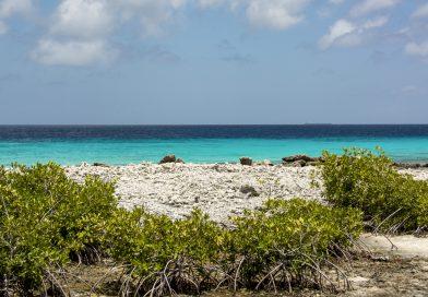 Bonaire_Strand_bei_Alice_in_Wonderland_Dive_Site