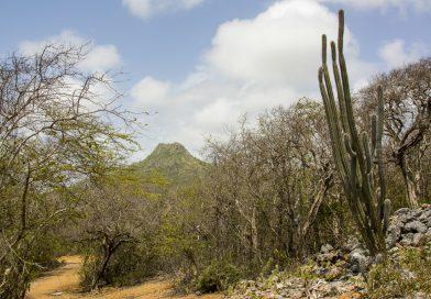 Curacao_Christoffelpark_mit_Blick_auf_Christoffel_Mountain