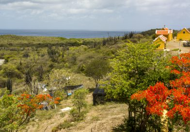 Curacao_Landhuis_Knip
