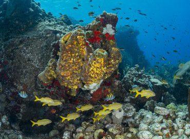 Dominica-Reef