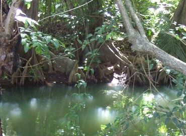 Dominica_Indian_River