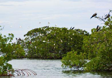 Mangroven Anse du Canal