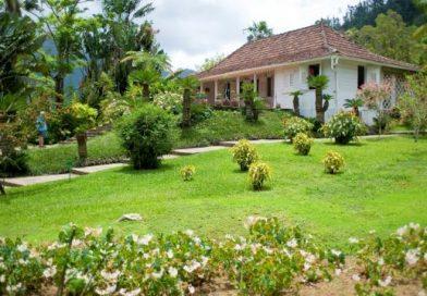 Martinique_jardin-de-balata-luc-olivier