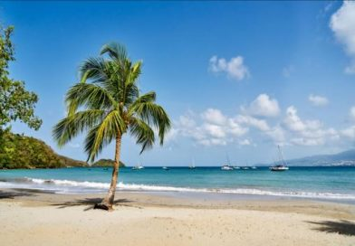 Martinique_plage_martinique_cocotier_r.haughton
