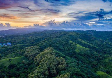 Tobago_forest resevre