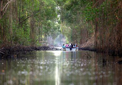 Trinidad_CaroniSwamp