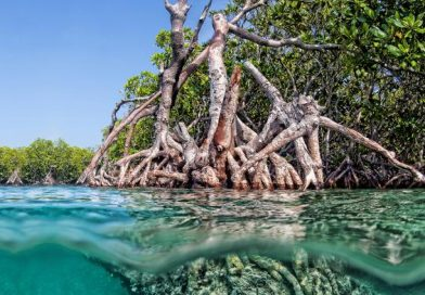 gilligans-island-guanica