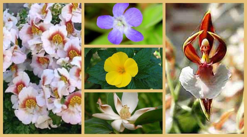 Pflanzenwelt Karibik – 5 typisch kubanische Pflanzenschönheiten