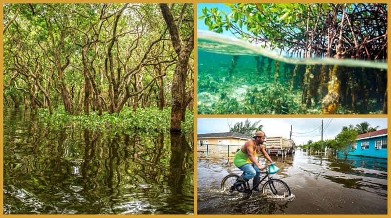Cayman Islands – Bebauung von Mangrovengebieten erhöht die Hochwassergefahr