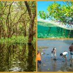 Jamaika – Große Besorgnis über den Zustand der letzten Mangrovenwälder