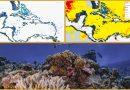 Weltweit erste detaillierte Karte der Korallenriffe der Erde – der Allen Coral Atlas – ist jetzt online