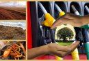 Kraftstoff aus Sargassum-Algen – eine alternative Energiequelle für die Karibik?