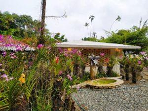 floracion-de-orquideas-en-el-jardin-botanico